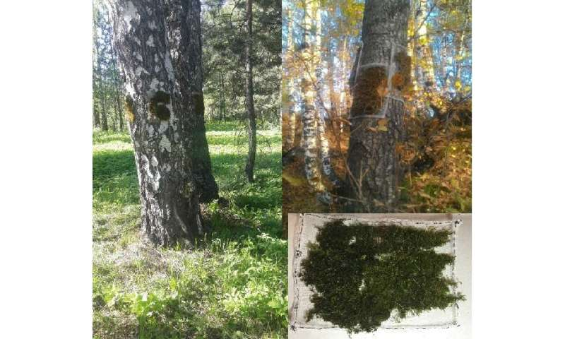 Physicists propose to carry out neutron activation analysis of mosses for environmental monitoring