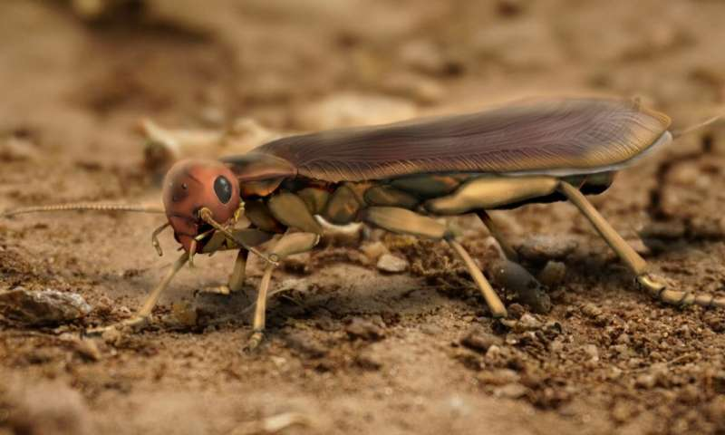 **Phylogenomic analyses shows group of winged insects developed from terrestrial ancestor