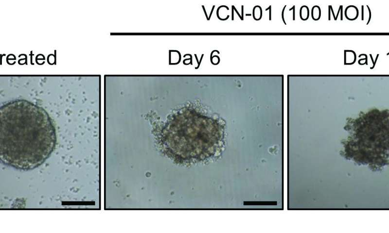 **Genetically modified virus shown able to kill tumors in mice with retinoblastoma