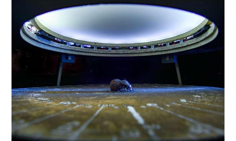 Dung beetles navigate better under a full moon