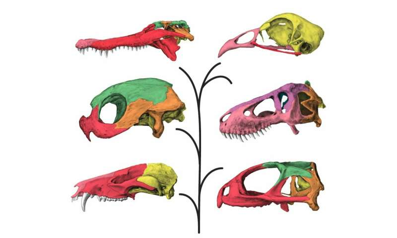 T. rex possessed a unique flexible skull