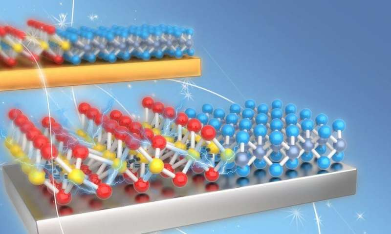 Phase transition dynamics in two-dimensional materials