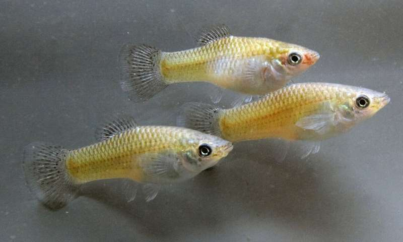 Fish with a high level of familiarity are more aggressive towards each other