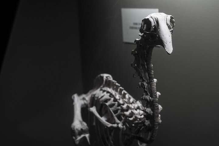 Origins of giant extinct New Zealand bird traced to Africa