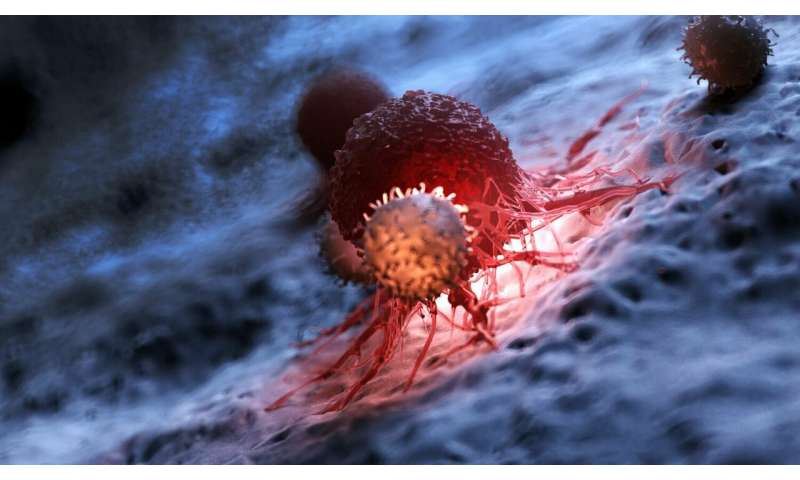 Scientists devise strategies to counteract T cell exhaustion in CAR T cancer therapies