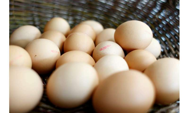 Storing energy with eggshells