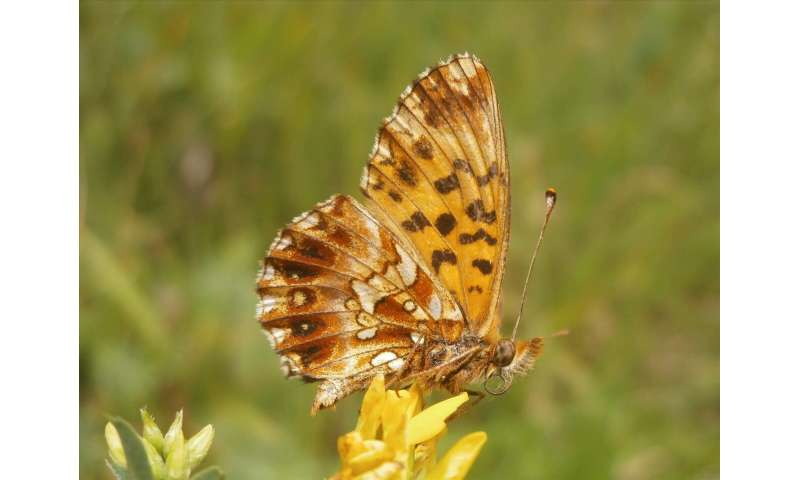 Butterfly numbers down by two-thirds—scientists call for a change in agricultural approaches