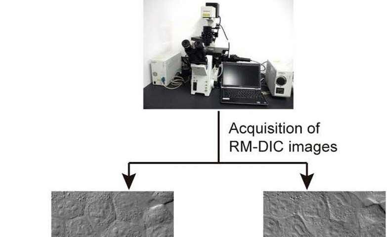Spinning-prism microscope helps gather stem cells for regenerative medicine