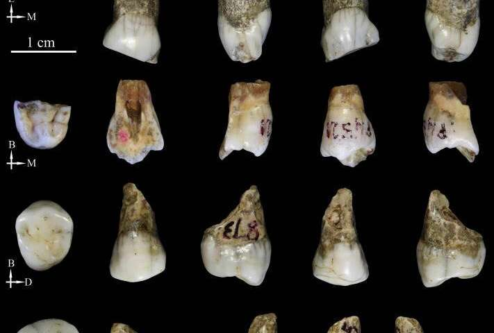 Tongzi hominids are potentially a new human ancestor in Asia