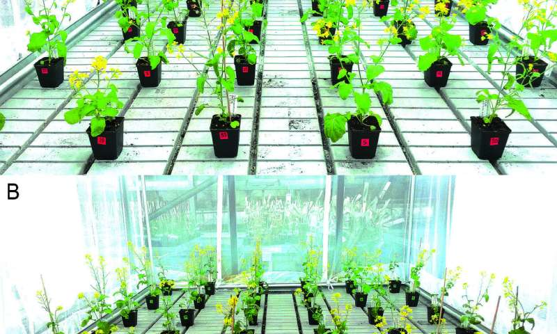 **Interplay of pollinators and pests influences plant evolution