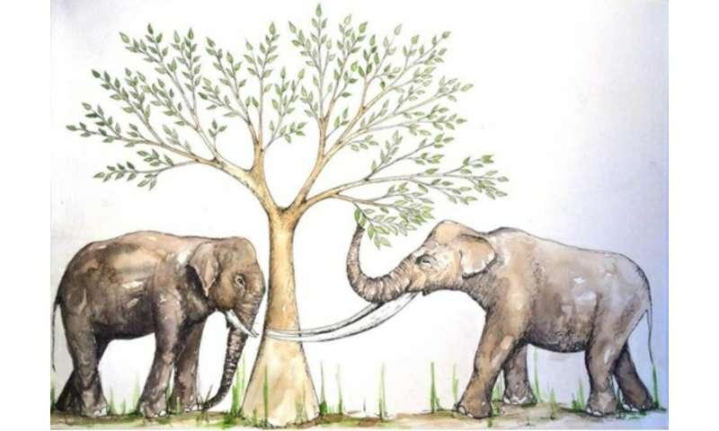 Asian elephant outlives stegodon—advantage due to diverse diet