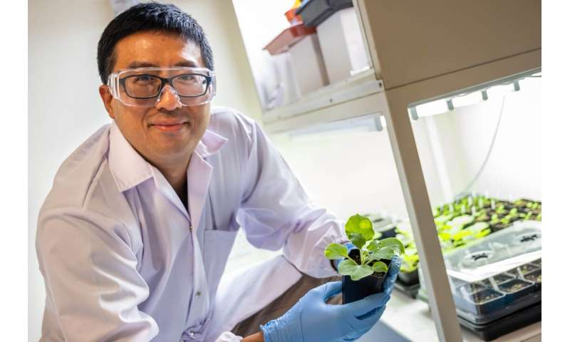 Scientists discover sustainable way to increase seed oil yield in crops