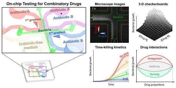 On-chip Drug Screening for Identifying Antibiotic Interactions in Eight Hours