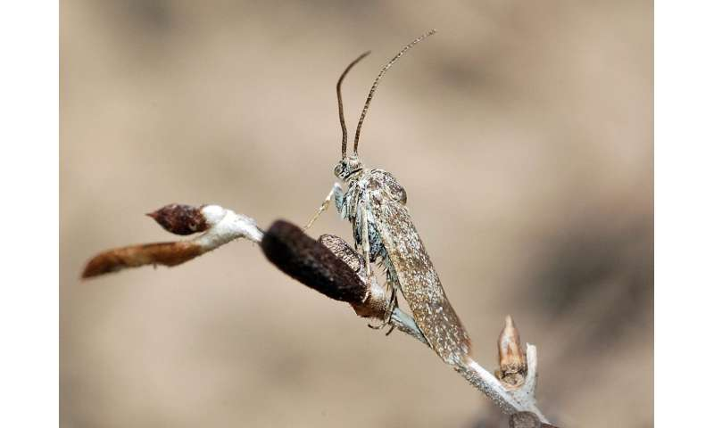 Researchers discover a new moth family