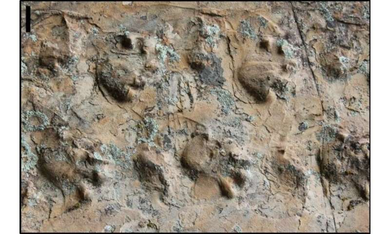 Newly discovered fossil footprints force paleontologists to rethink ancient desert inhabitants