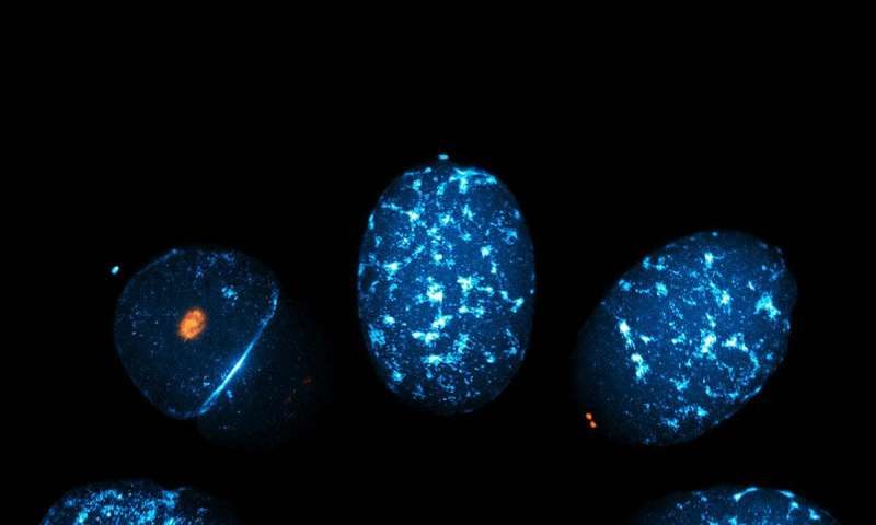 Cell polarity: An aurora over the pole