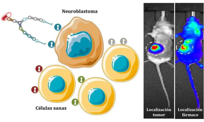 New synthetic molecules deliver drugs to the neuroblastoma