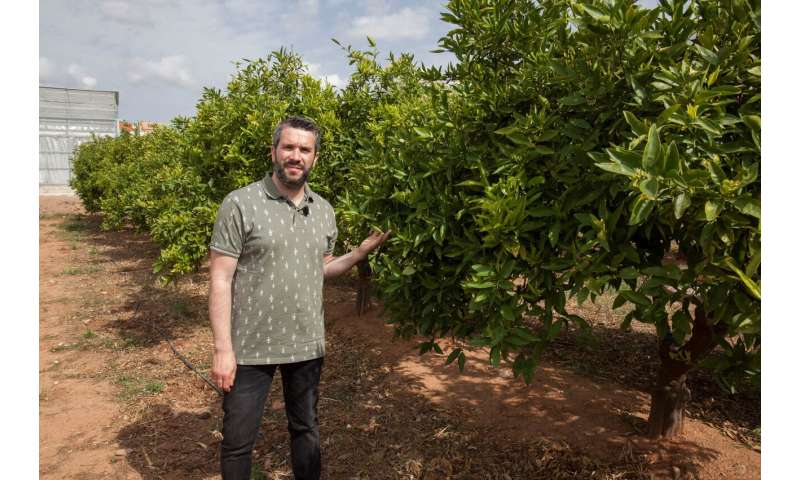 Climate change puts commercial viability of citrus, vineyards and olive trees at risk