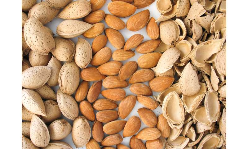 Sequencing the almond reveals how it went from bitter to sweet