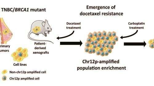 docetaxel y carboplatino para el cáncer de próstata