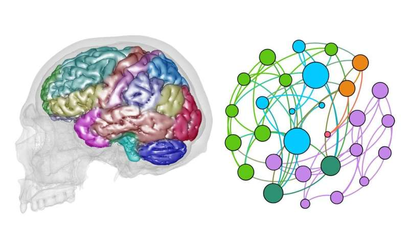 Network analysis applied to the study of cerebral macroanatomy