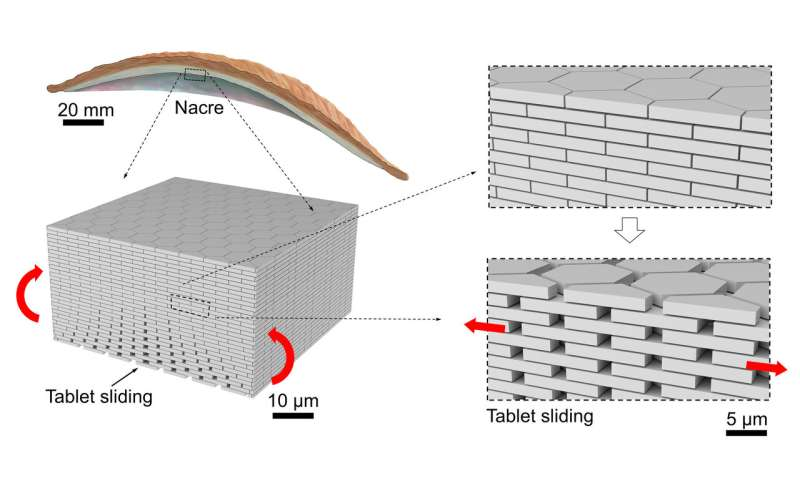 New type of glass inspired by nature is more resistant to impacts