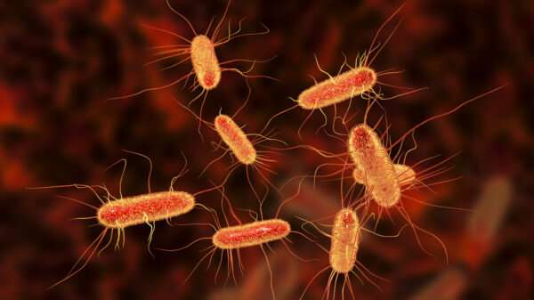 Existing drug may help fight the lethality of E. coli infection
