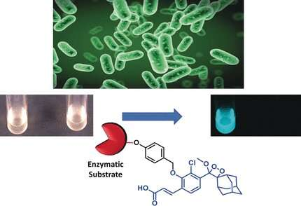 Chemiluminescence probes for the rapid and sensitive detection of salmonella and listeria