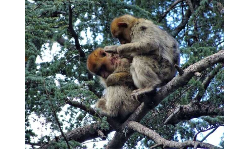 "Unprecedented display of concern and ""consolation"" towards an unknown monkey offers hope for endangered species"