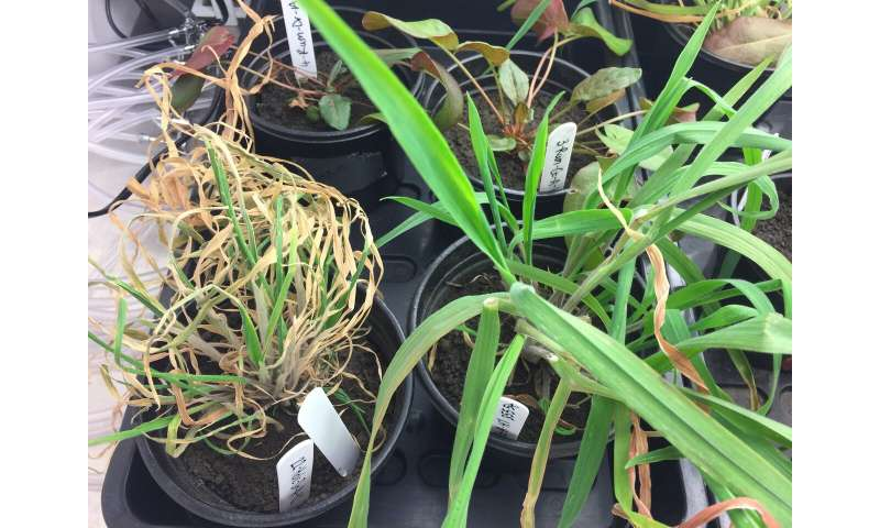 Plants under drought stress change their microbes through their roots