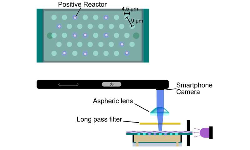 Smartphone virus scanner is not what you think - A new portable device lets smartphones count real biological viruses