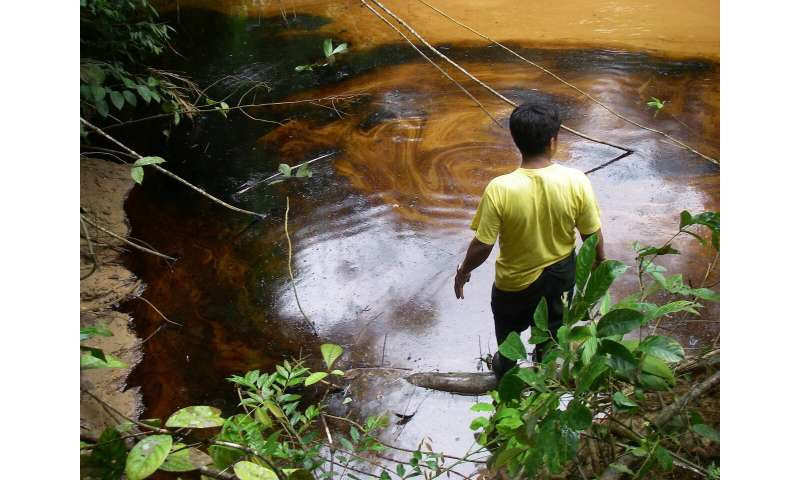 High lead concentrations found in Amazonian wildlife