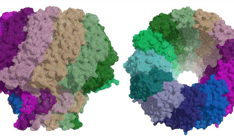 Researchers describe a key protein for Epstein-Barr virus infection