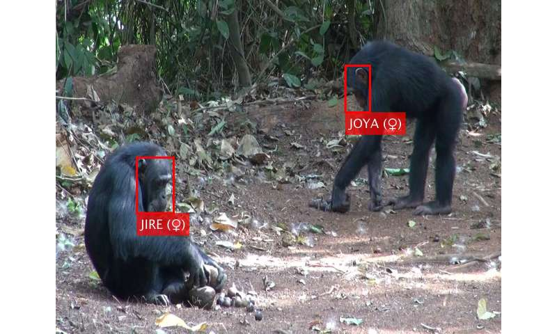 Artificial intelligence used to recognize primate faces in the wild