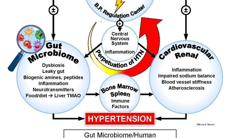 New research suggests gut bacteria may be linked to high blood pressure and depression