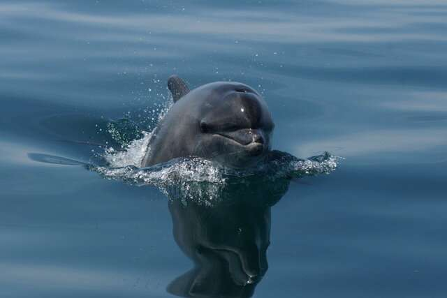 Environment: Pollutants found in skin and blubber of English Channel dolphins