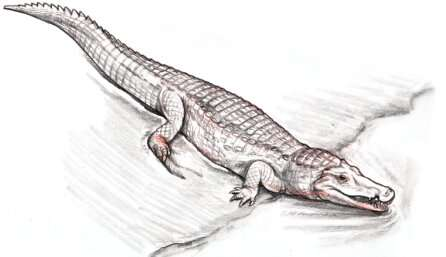Prehistoric crocodile fossil discovered in New Mexico