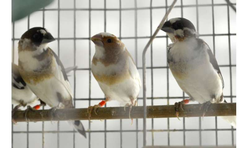 Genetically tailored instruction improves songbird learning