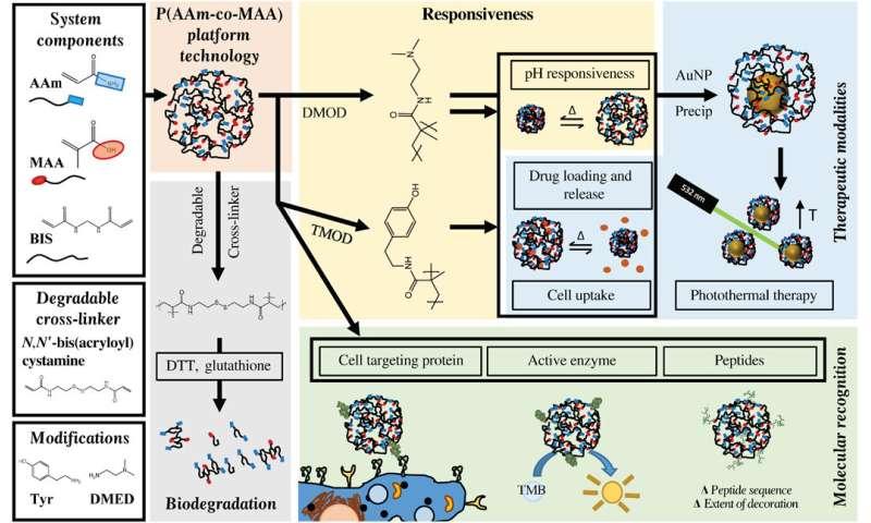Novel nanogels hold promise for improved drug delivery to cancer patients