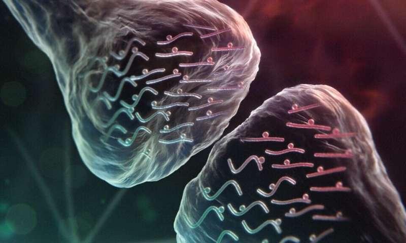 Sleep and synaptic rhythms