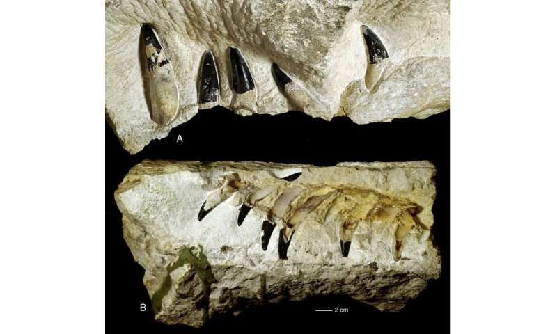 150-million-year-old sea-monster fossil found in Poland