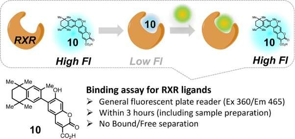 Synthetic compound provides fast screening for potential drugs