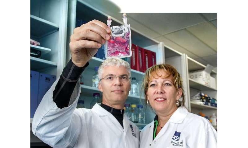 Cancers du sang: la greffe de cellules souches de nouvelle génération réduit considérablement les complications pour les patients
