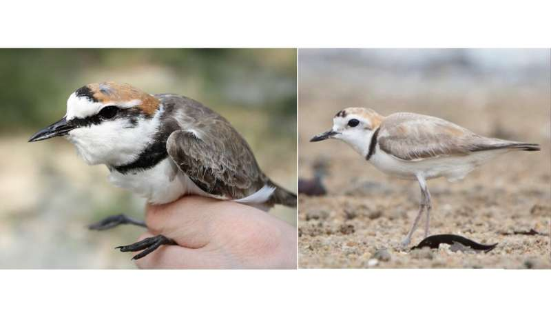 Scientists find two identical-looking bird species have very different genes