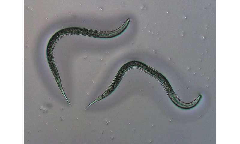 How nematodes outsmart the defenses of pests