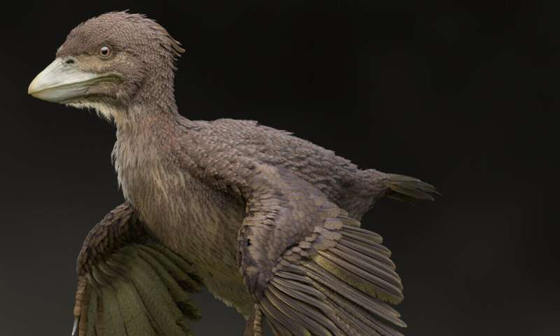 Fossil of bird from Early Cretaceous found in Japan