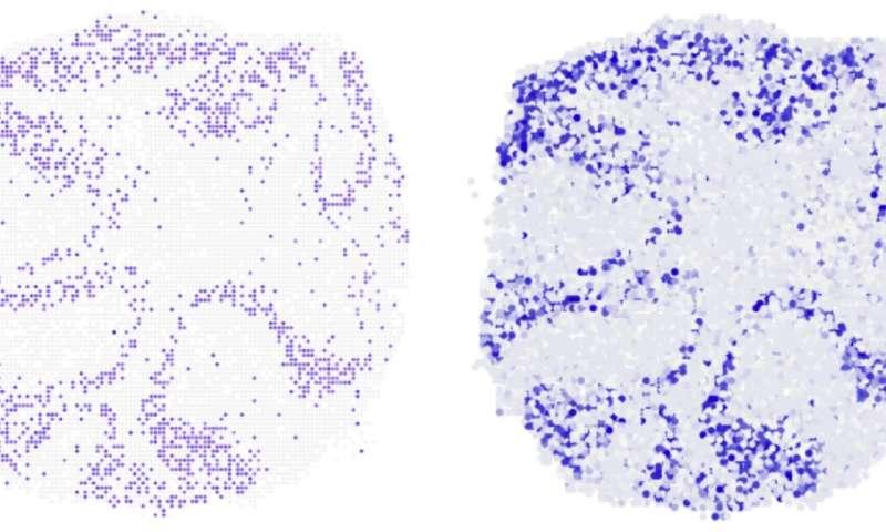 3-D maps of gene activity