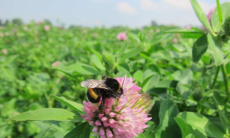 On balance, some neonicotinoid pesticides could benefit bees