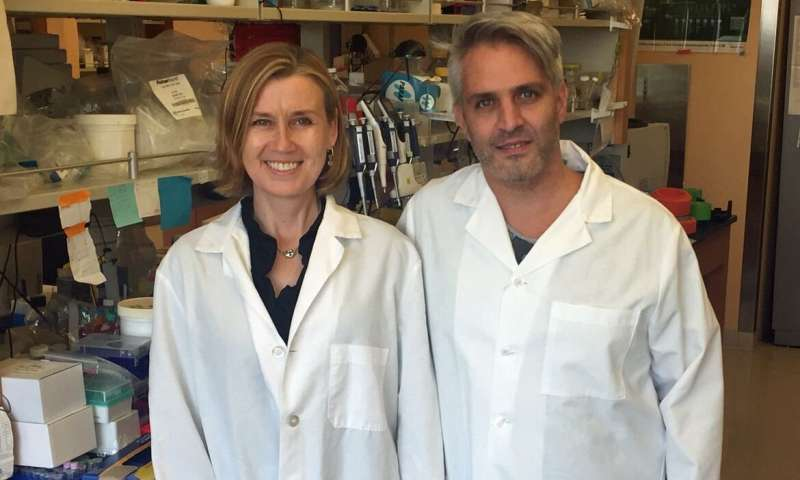 Researchers identify protein that governs human blood stem cell self-renewal