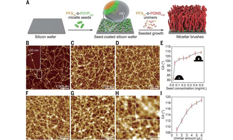 A way to functionalize surfaces with cylindrical micelle brushes with controlled length tailored chemical options
